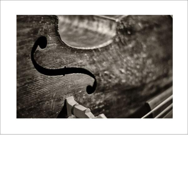 Bass 02 - Photo: Frank Schindelbeck Jazzfotografie