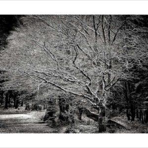 Baum im Winter 01 - Photographie: Frank Schindelbeck